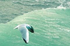 Mouette planant sur les vagues de la bise, Evian. Poème àˆ la quête.