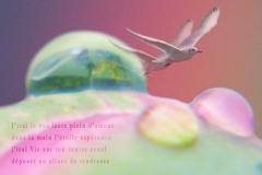 Montage: goutte sur un bouton de pivoine et un oiseau. Vue sur le jardin de la Rivière-Enverse, Haute-Savoie. Poème sur le tendresse.
