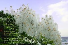 Fleurs gelŽées par les embruns de la bise, Evian. Poème àˆ l\'hiver.