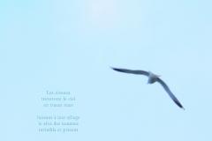 Mouette dans le ciel d\'hiver. ˆ Evian. Poème au rève.