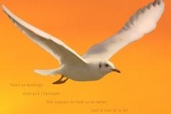Montage d\'une mouette du Lac LéŽman. Poème àˆ la vie.
